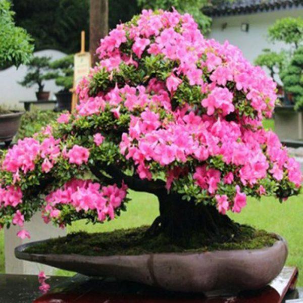 青州时令草花种植基地