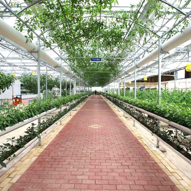 山东智能薄膜温室种植优势和育苗