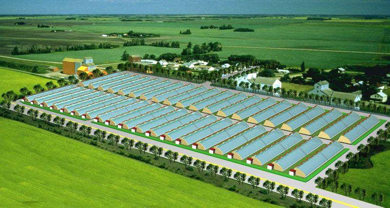 日光温室造价_日光温室大棚建造找七洲温室