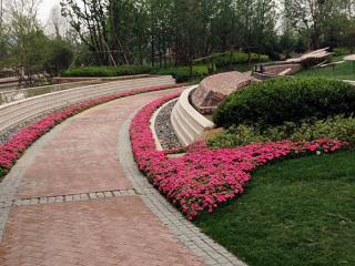 浙江绿化花卉工程案例