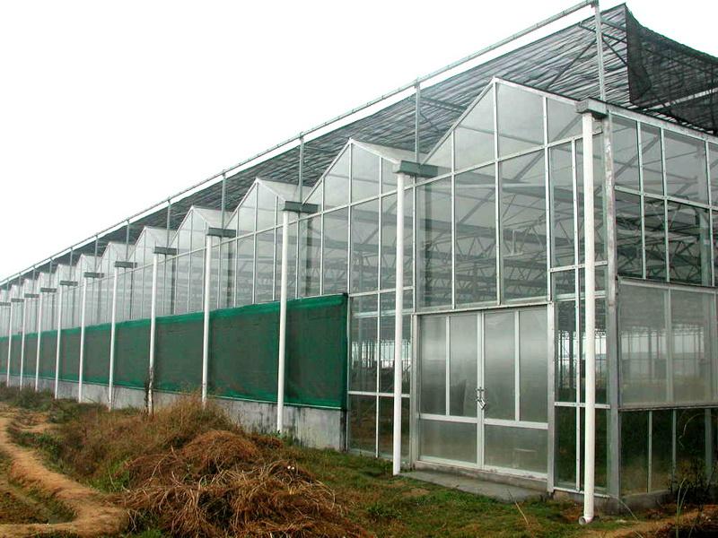 溫室大棚就選通茂農業-廣西智能溫室建設