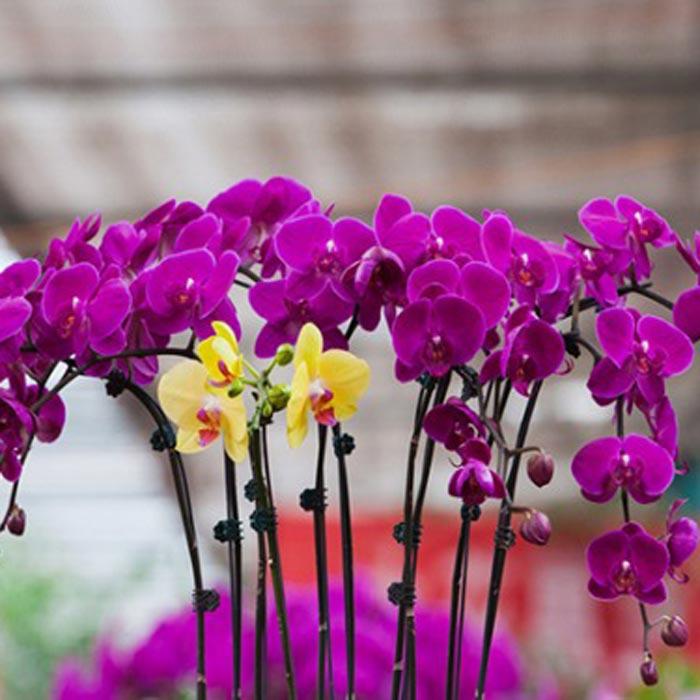 绿化用花卉苗木基地