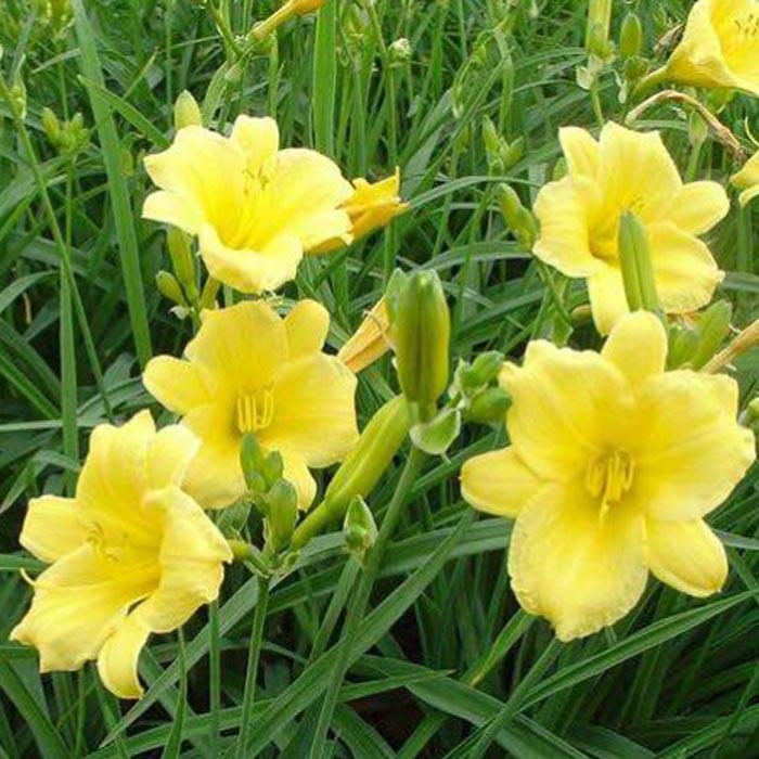 宿根花卉品种特色有哪些?
