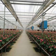 水暖热风机在花卉大棚里的应用