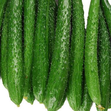 黄瓜怎样栽培才能实现产量?