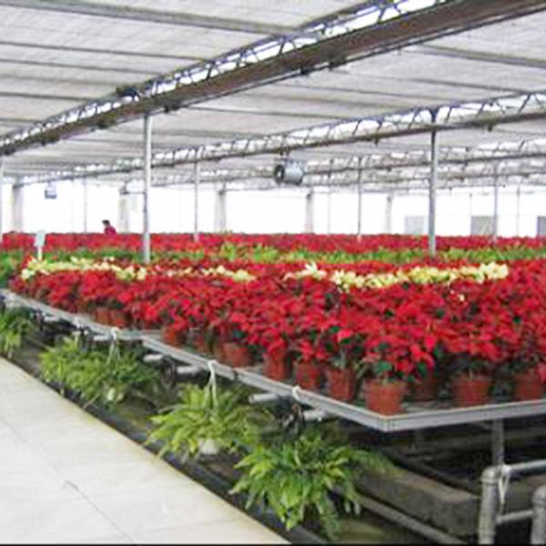 花卉温室大棚需充分利用光照