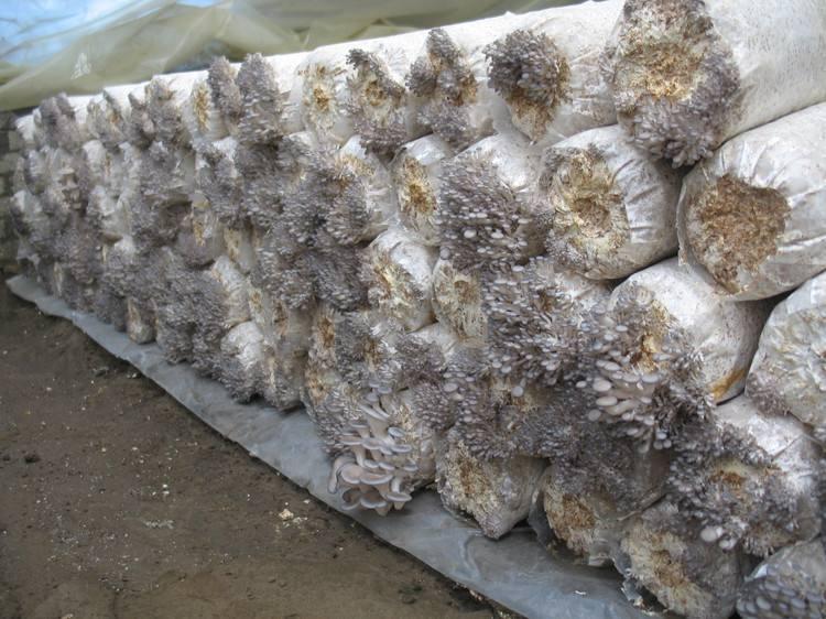 重庆食用菌栽培技术