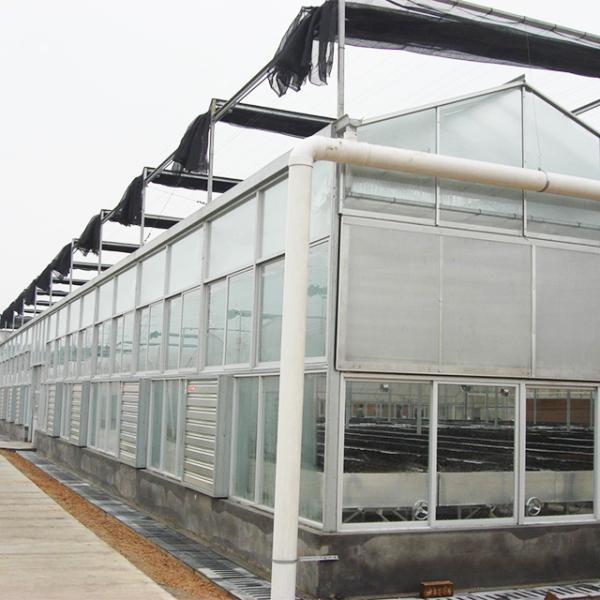 文络温室建造商分享降低玻璃连栋温室温度的办法