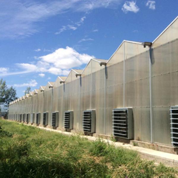 阳光板温室公司