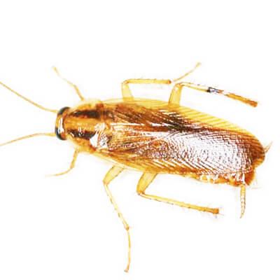 想找周到的蟑螂防治当选一丁安环境工程,厦门甲醛检测哪家好