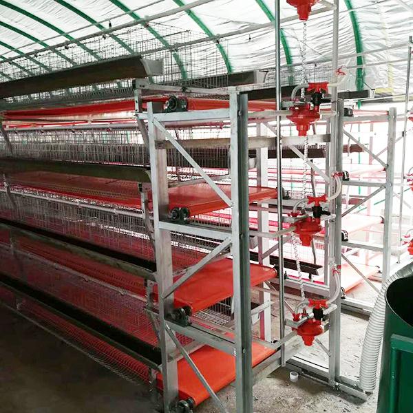 规模大的自动化养鸡设备厂家-湖北全自动鸡笼设备厂