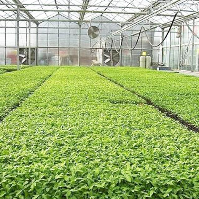专业靠谱的育苗温室推荐|内蒙古育苗温室