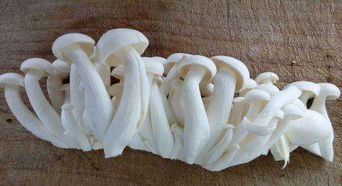 安徽销量好的白玉菇供应-白玉菇值得信赖