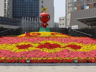 山东绿化花卉工程案例